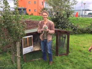 Kippen op de voedseltuin
