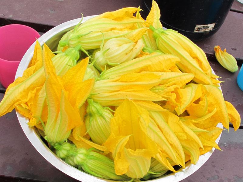 Courgette bloemen