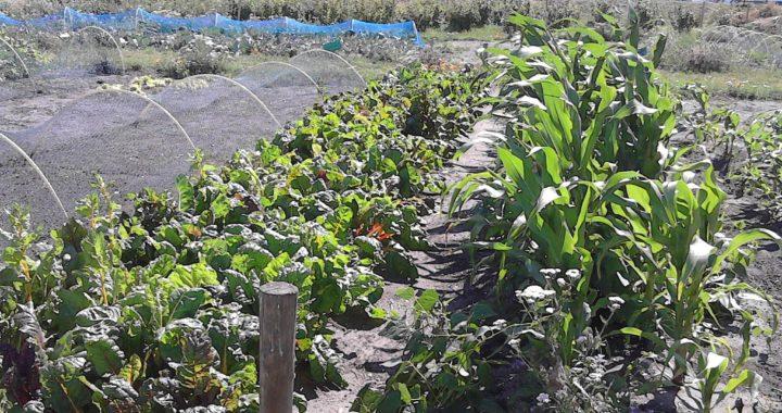 Top onze groenten zijn veilig u the effects of air for Groenten tuin