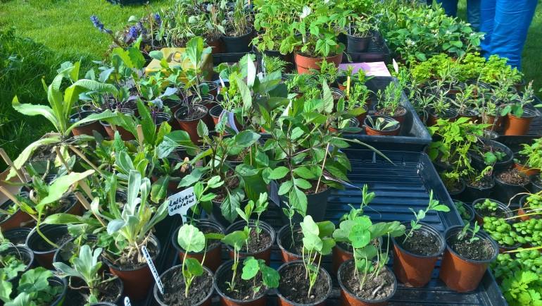 Plantjesmarkt